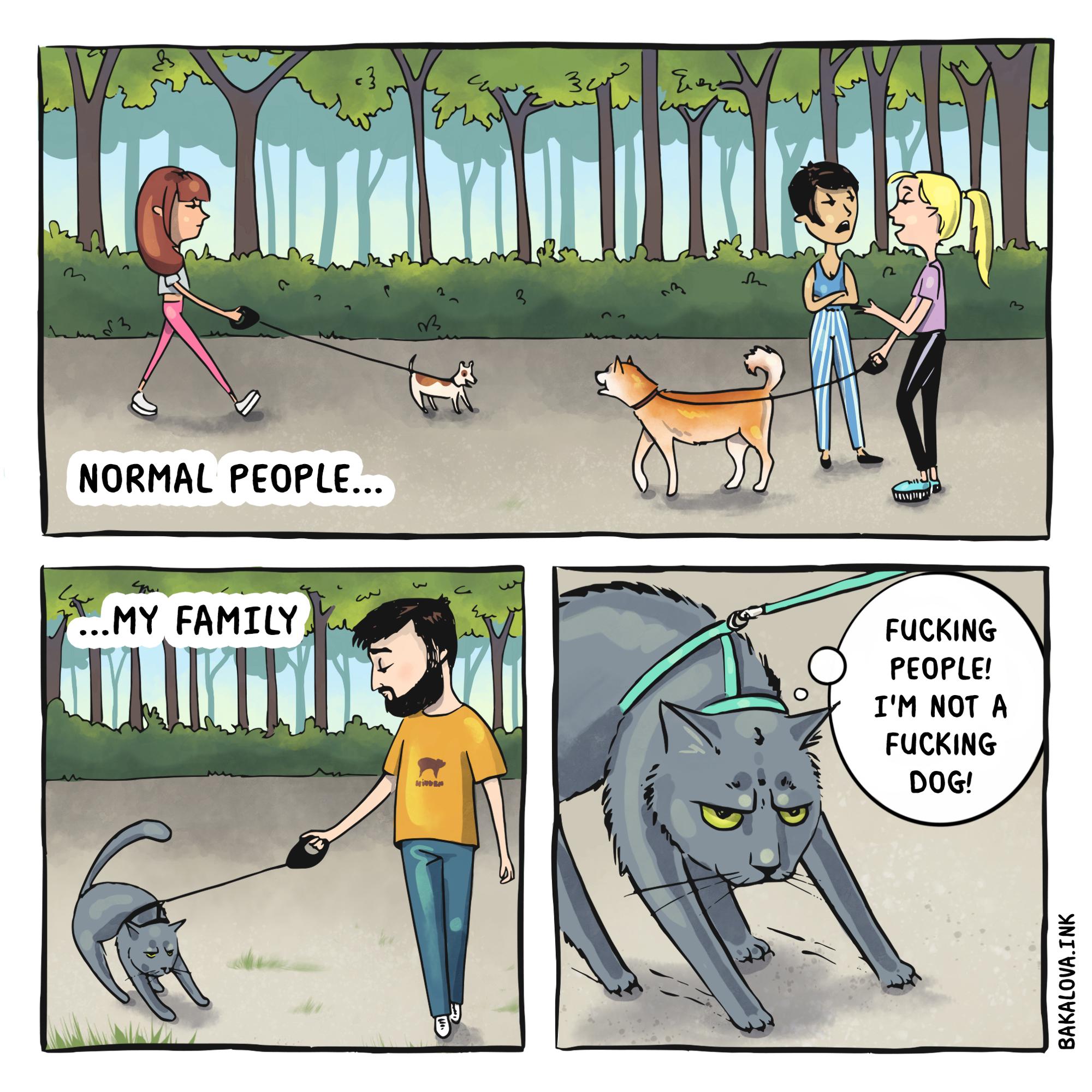 adventure cat